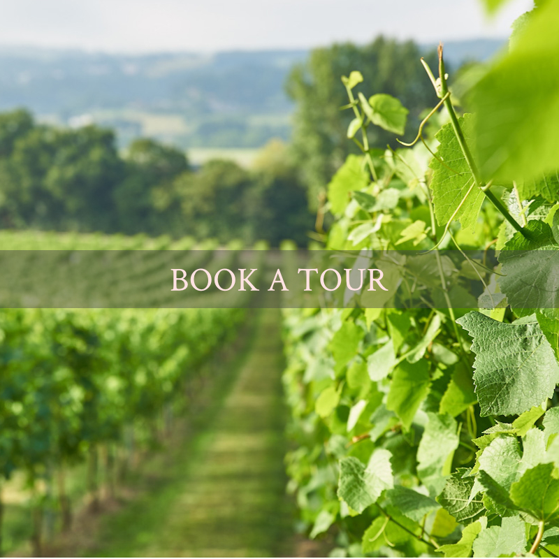 book a tour of the vineyard